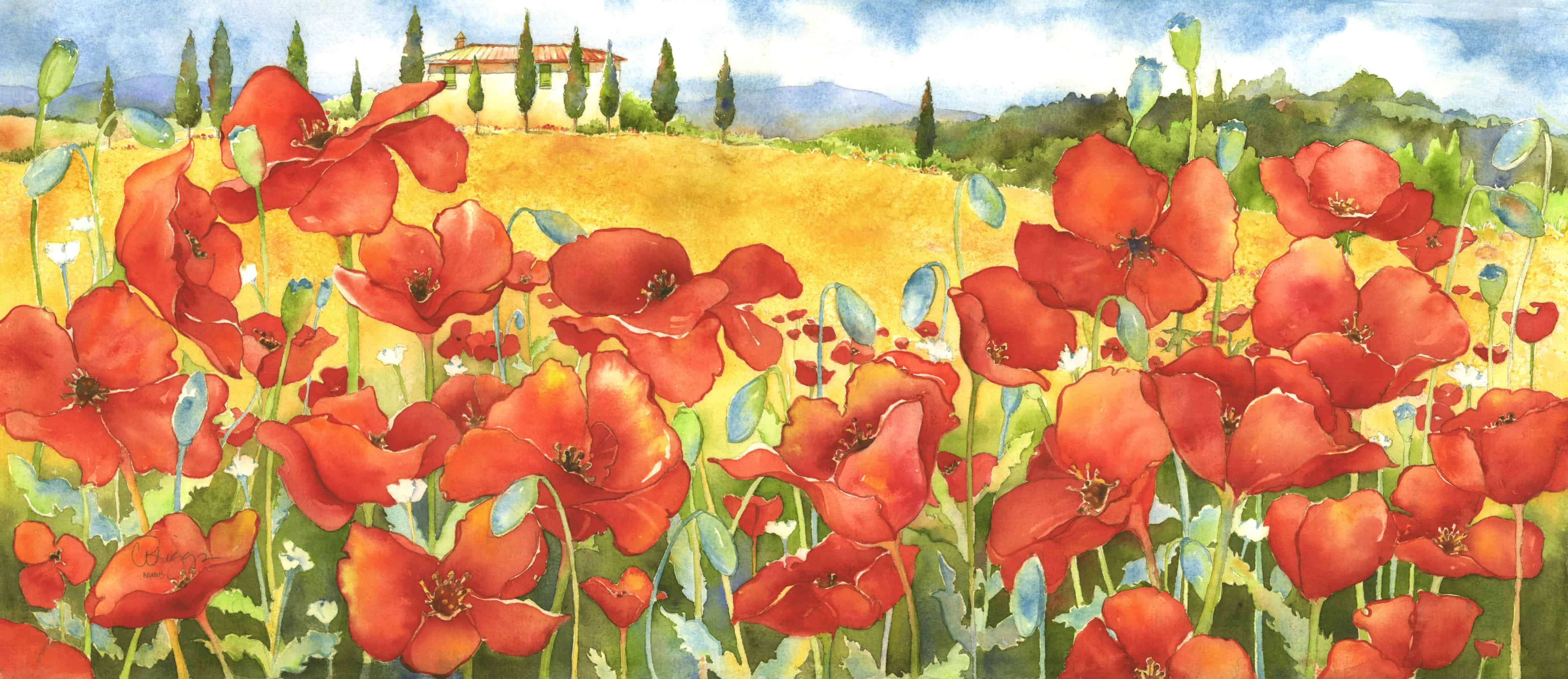 poppies, On the Road to Pienza