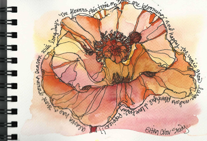 Poppy, Poppy Sketch – Sitka Alaska
